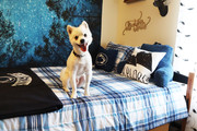 Our Penn State University Housing is pet friendly!