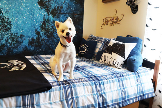 We are! a Pet friendly town home community!