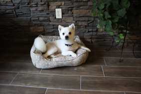 Don't want to leave your furry friend at home? Bring them! We are pet friendly at Madison and Brookside.