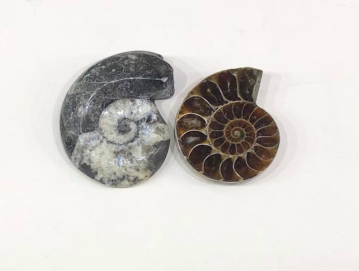 Fossil Pair