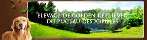 golden retriever haute garonne caraman revel toulouse