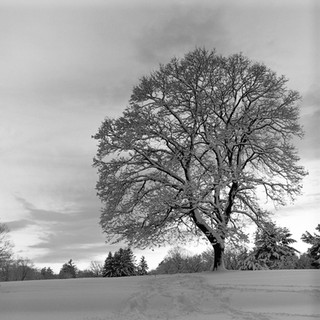 Fresh Snow, Twilight