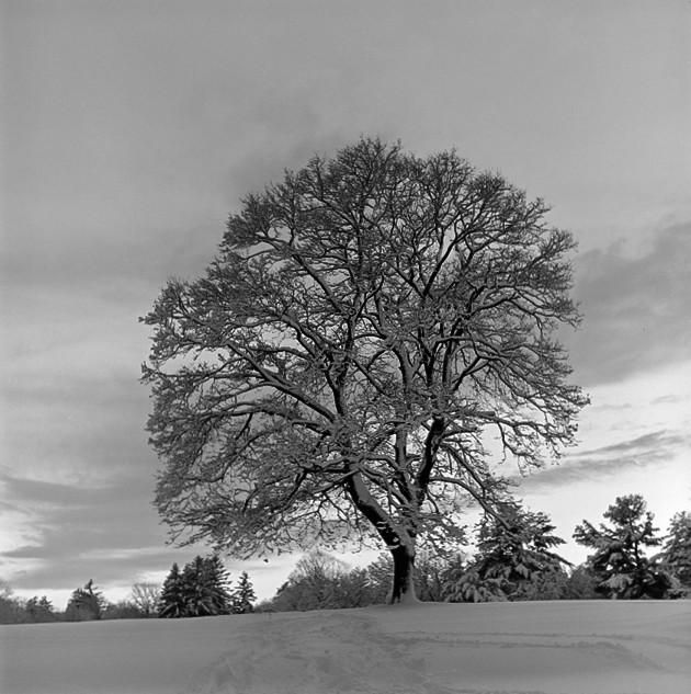 Fresh Snow, Twilight II