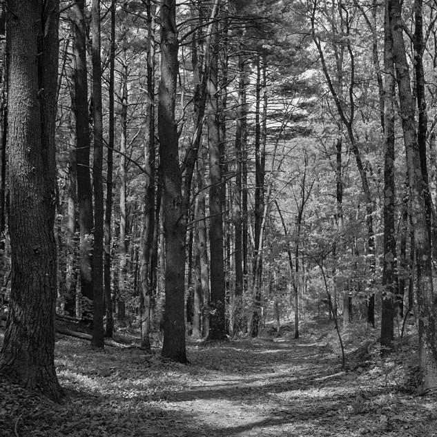 The Path More Taken