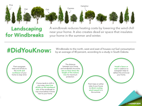 Save Money With Landscaping: Windbreaks