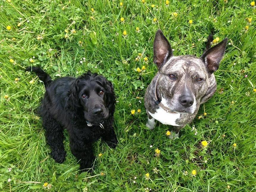 Gruppentraining mit Hund Thun BeO-Dogs.J