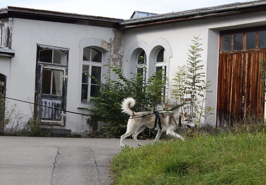 Mantrailing 1 Thun BeO-Dogs_edited.jpg