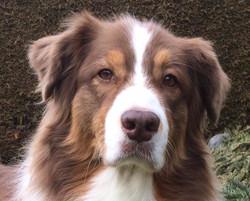 Hundetraining Thun 5 BeO-Dogs_edited.jpg