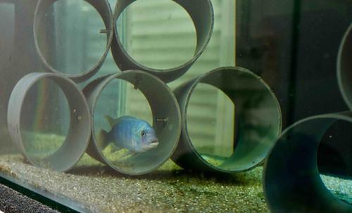 fishlab2.jpg