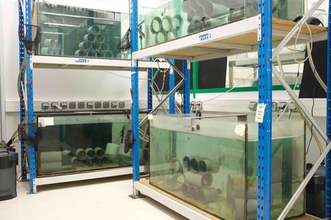 fish_lab1.jpg