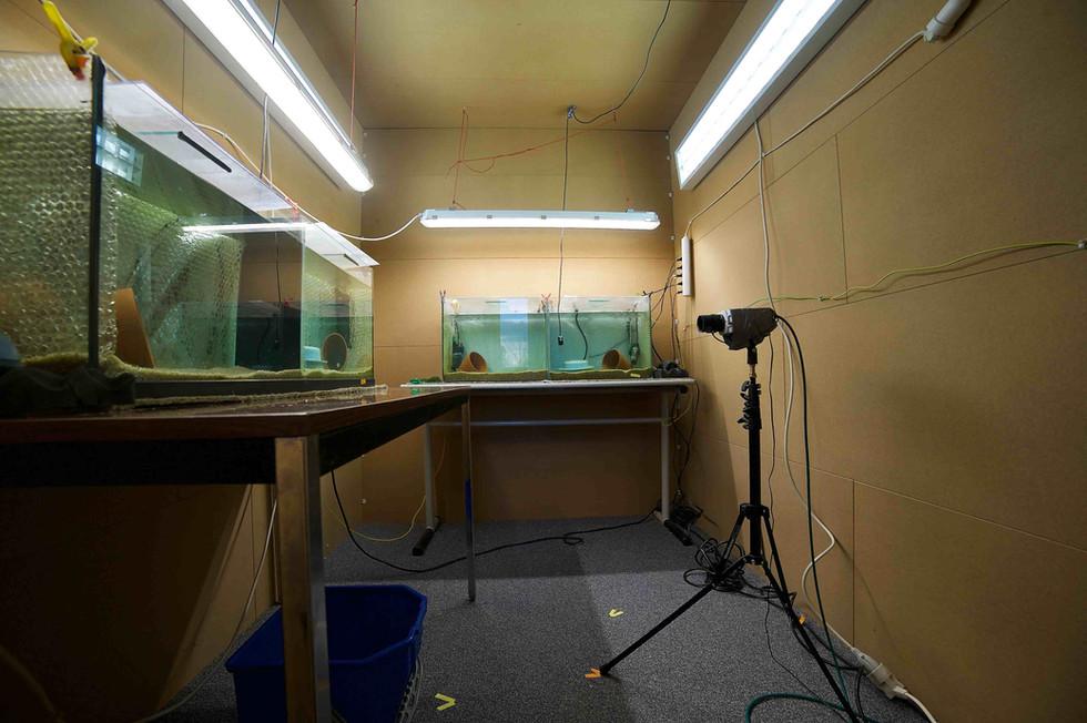 acousticchamber_fish.jpg