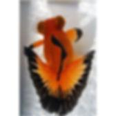 Butterfly Tail.jpg