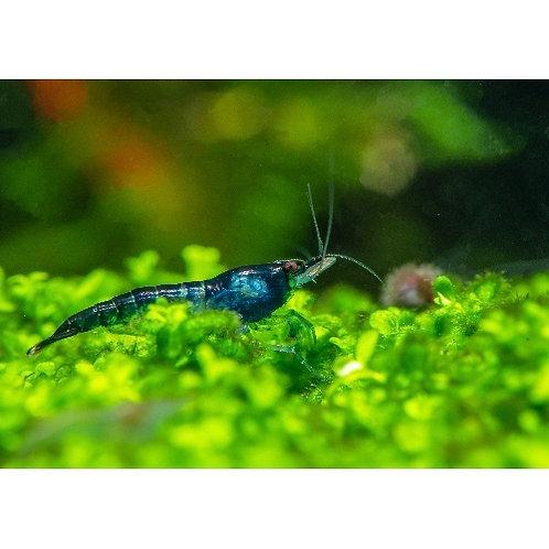 Blackberry Shrimp