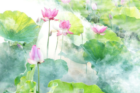 lotus-2528456_1920.jpg