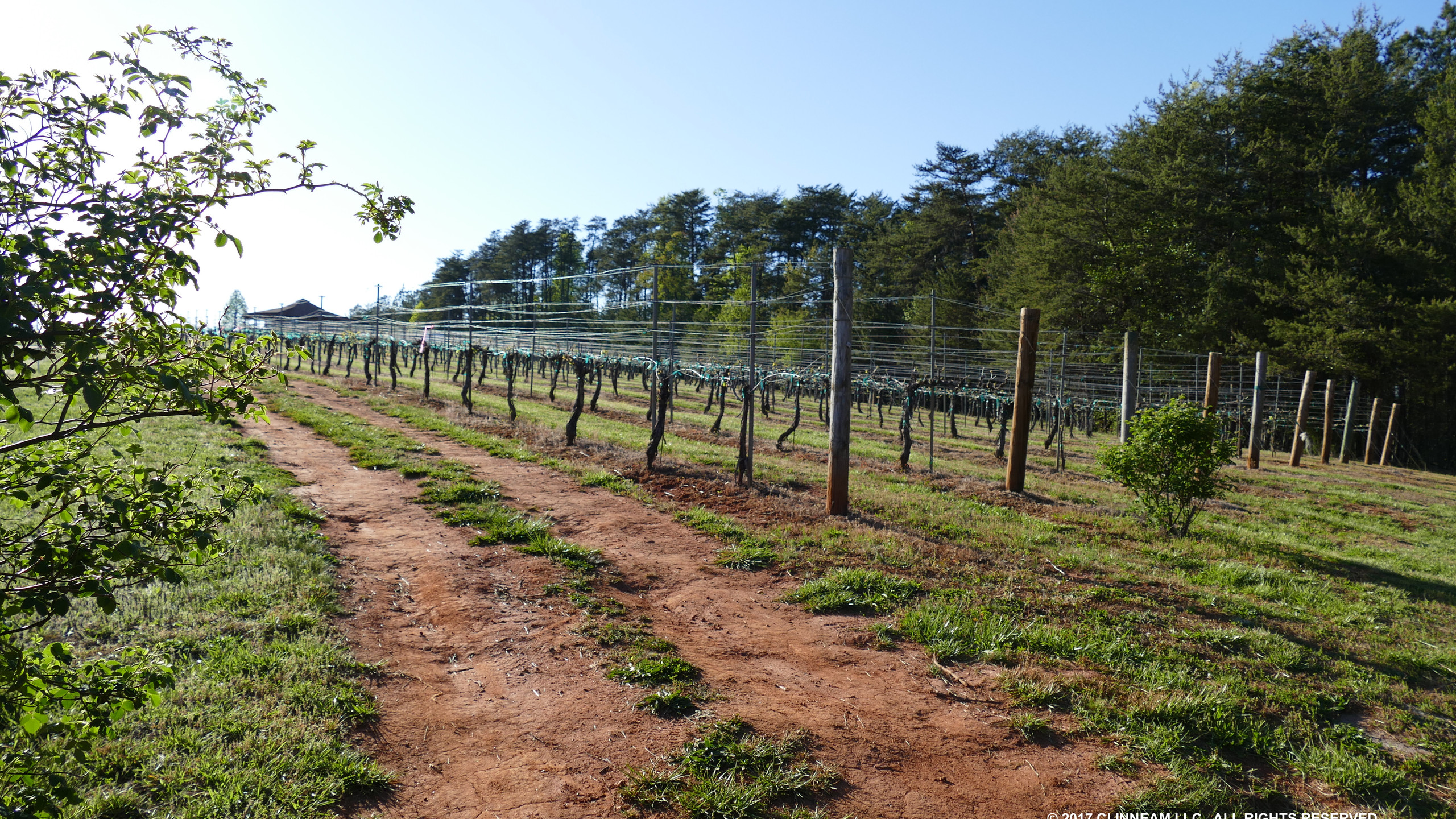 MBV's Vines