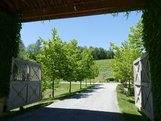 Roaring River Vineyard - A growing French Village in Traphill