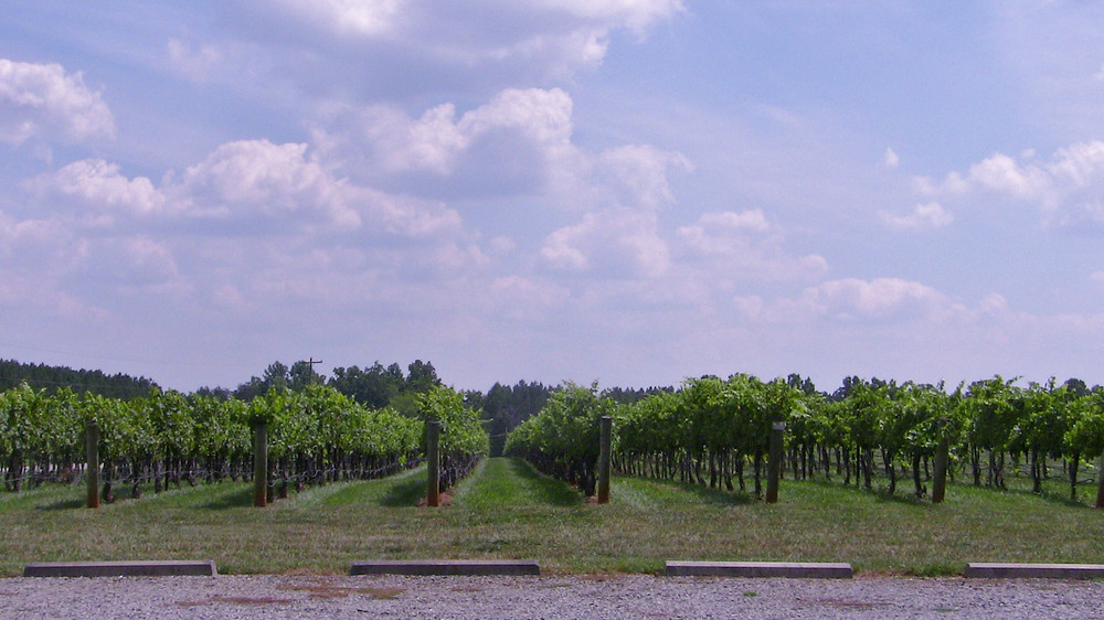Flint Hill Vineyards - view from Tasting Room Parking Lot