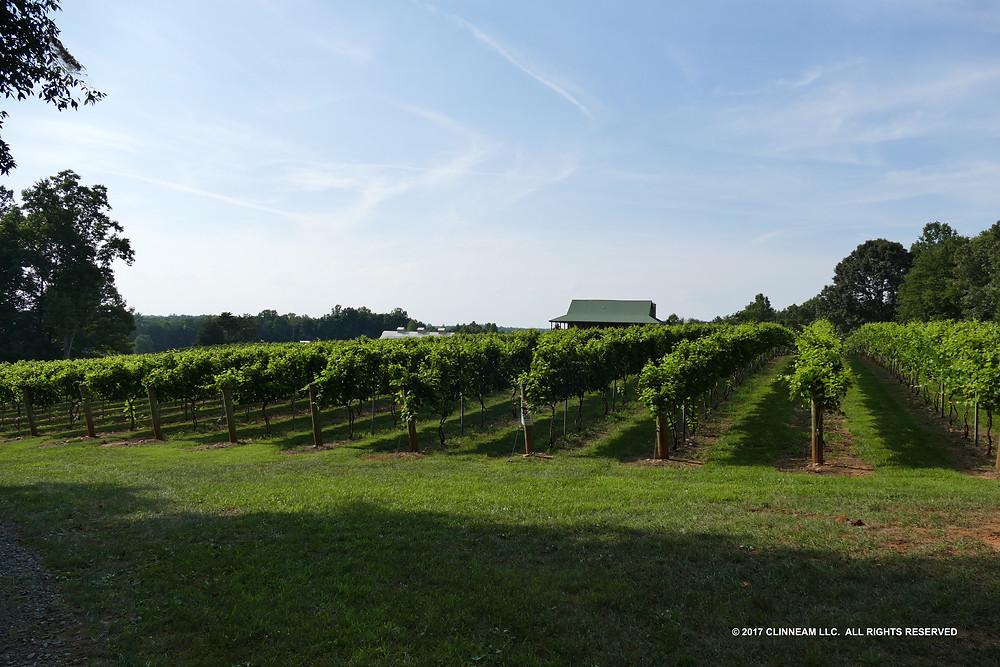 The Vineyard at Divine Llama Vineyard East Bend, NC