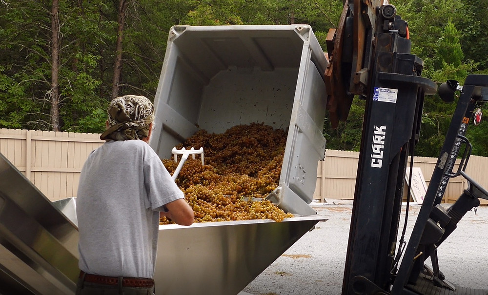 Unloading the Bins at Adagio Vineyards
