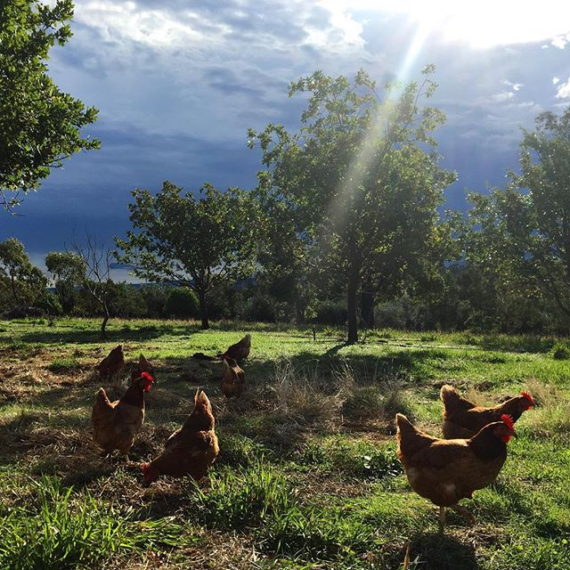 The sun breaking through after the deluge had passed. The girls went crazy chasing bugs in the puddl