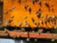 bees-2254088_1280.jpg