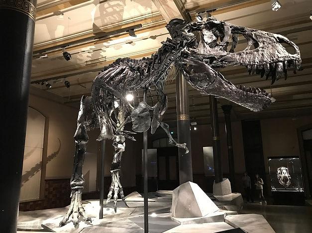 dinosaur-2368475_1280.jpg