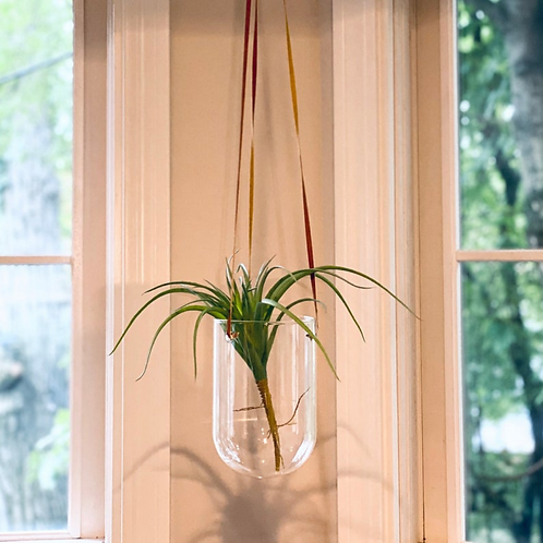 Glass Hanging Planter Vase with Leather Hanger