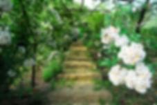 Giardino di Rose Antiche e Classiche