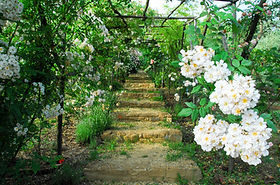 Rose il giardino di pianta foto gratis su pixabay
