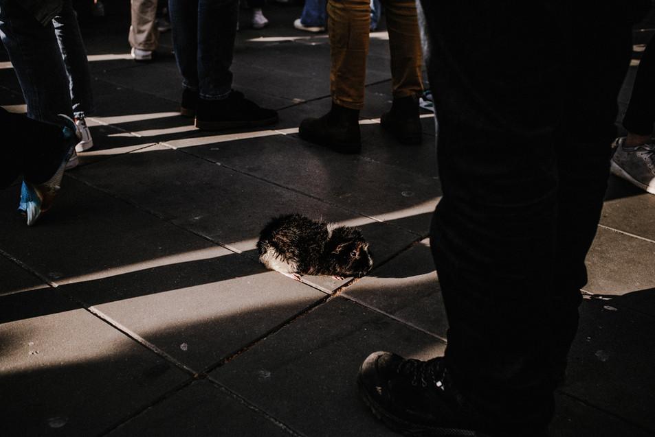 Julie Lefort photographe plateau cinéma concert spectacles friches voyages fontenay sous bois ile de france actualite manifestation 021