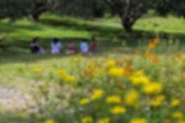 lava farm flowers.jpg