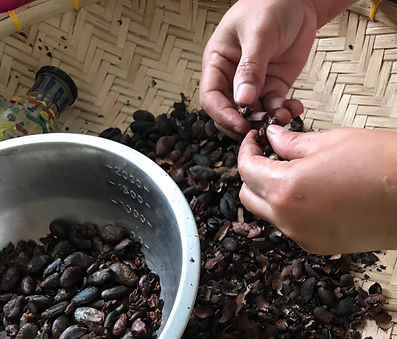 Home made cacao