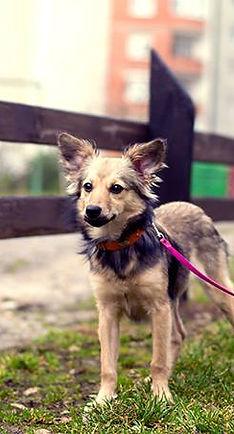 Cute puppy on a leash
