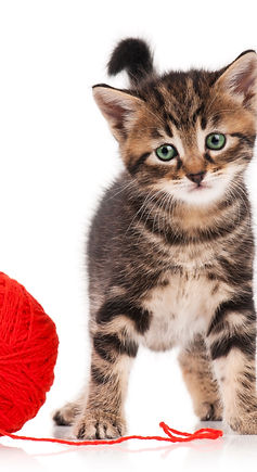 Kitten with red yarn