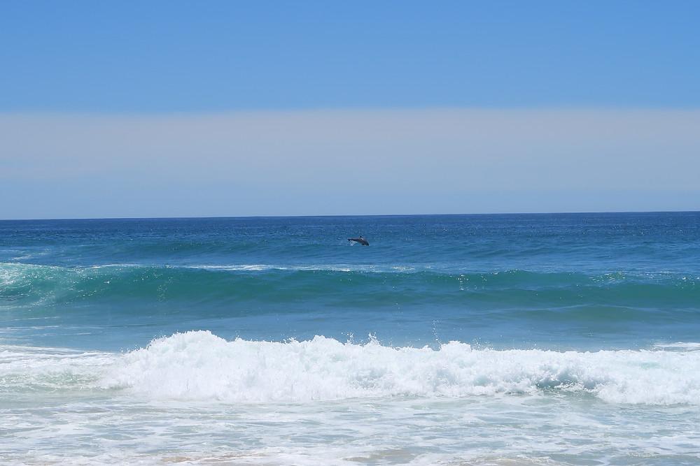 Dolphins at Woolgoolga