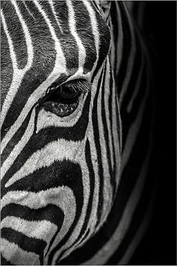 Best Black & White Print Competition