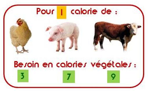 Calories végétales pour la viande