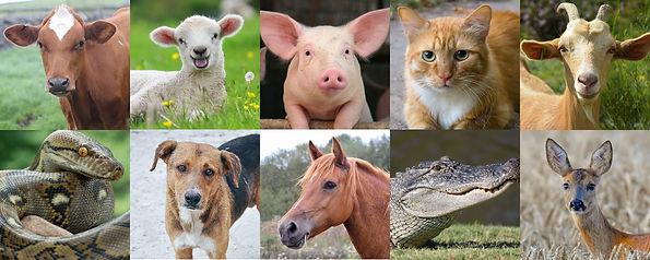 animal_victims.jpg