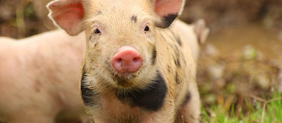 What is 'Veganism' ?
