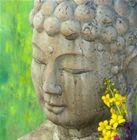 Buddha Card (2)