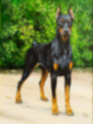 Doberman unframed.jpg