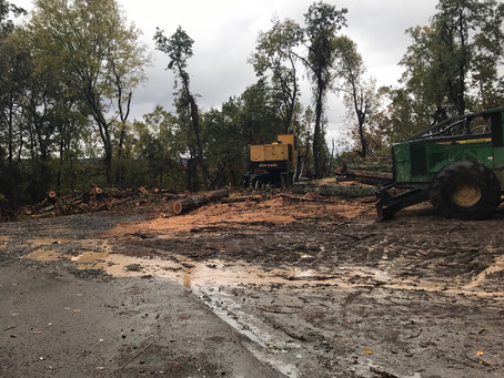 Open Letter to Dade County: Speak Up to Stop Deforestation