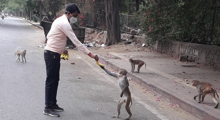 Food and water to stray animals1.jpg
