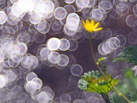 איך ההתמקדות מגבירה את תחושת החיוניות ואנרגית החיים?