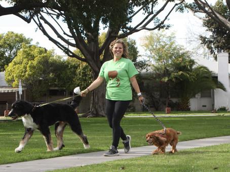Why We Aren't Your Average Pet Sitter or Dog Walker