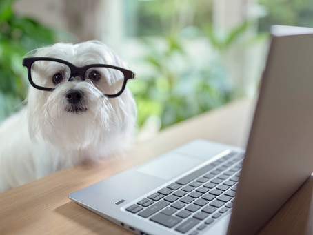 How To Request A Dog Walk or Pet Sitting Service with Barks N Purrs Pet Care!