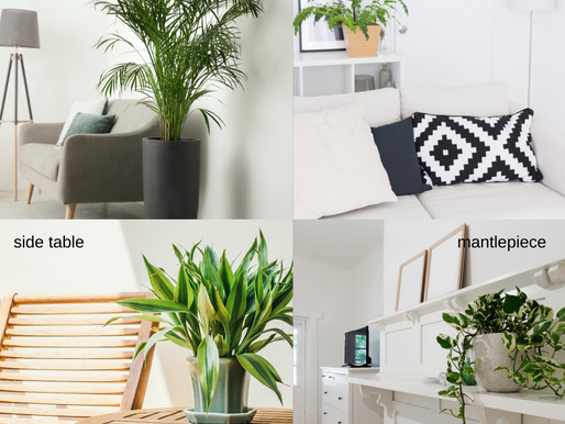 4 Easy Ways to Use Plants as Live Décor