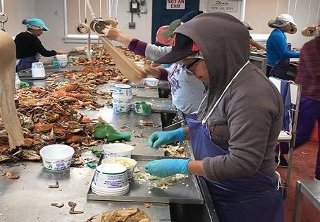 To help seafood industry, Harris urges reallocation of unused H-2B visas