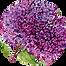 caraegiving logo1Xsm.png