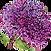 caraegiving logo1insm.png